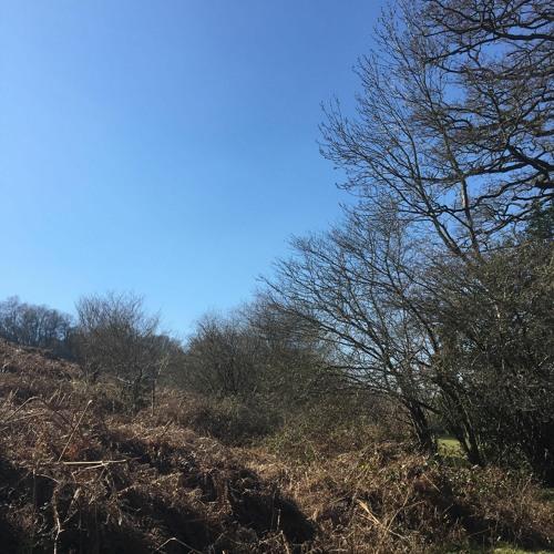 Meldon Hill Bracken 26 March 2020