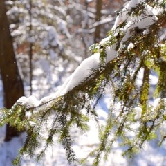 Late Winter Breath