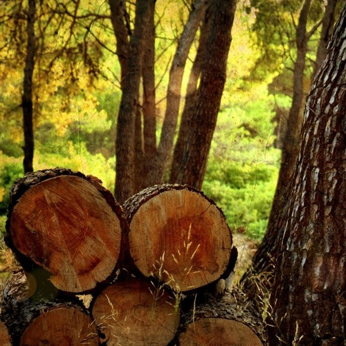 #47 - Momo Erzählt - Die Wette beim Holzmachen