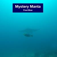 Mystery manta