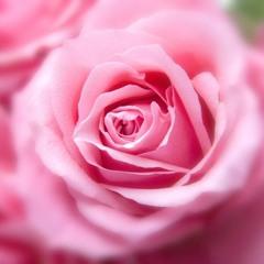 Liebesbekenntnis Vorgarten: Liebesbekenntnis