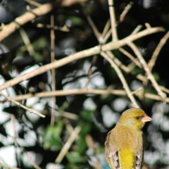 30 Minutes of Backyard Bird Sounds