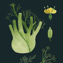 STBB#714 - Fennel(foeniculum vulgare)