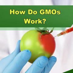How Do GMOs Work? - Episode 253