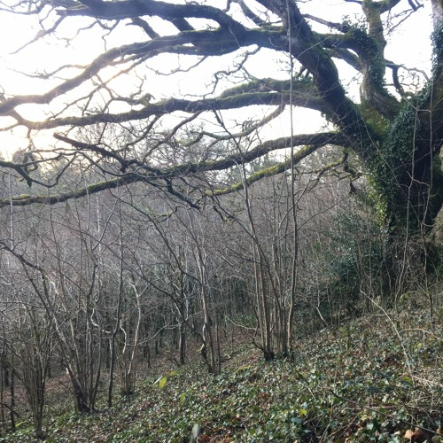 War Cleave Wood 15 March 2020