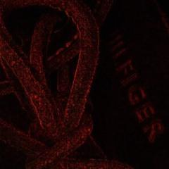 Southside x Future Type Beat 'Dread' (Prod. Tommy Hilhitta x 1Desro)
