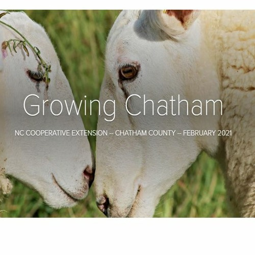 Growing Chatham February 2021 Podcast