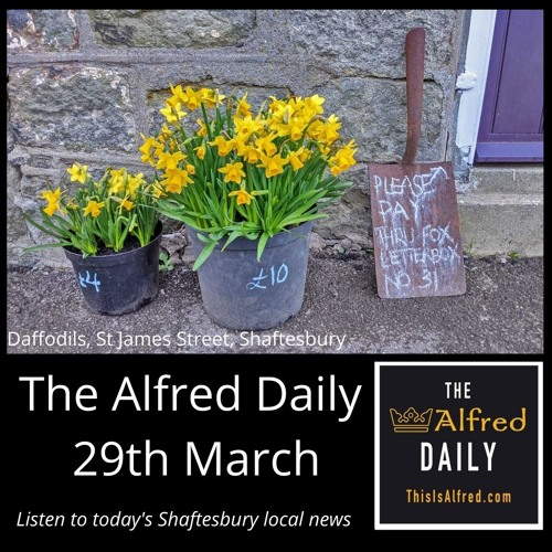 The Alfred Daily - 29th March
