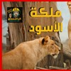 Download فيلم وثائقي - حيوانات مفترسة -اللبؤة ملكة الأسو Mp3