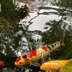 lofi beat 'koi pond'