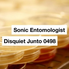 The Long-Term Consequences Of Some Small Mutations [Disquiet 0498 - Sonic Entomologist]
