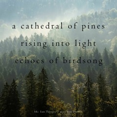 Boson Spin - A Cathedral of Pines [naviarhaiku345]