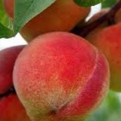 Peaches(Reframed Justin Bieber, Daniel Caesar, Giveon)