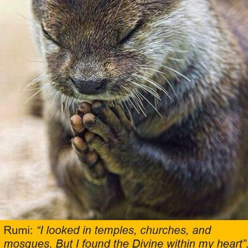 Repairing Love and Universal Healing Meditation
