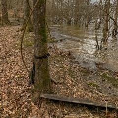 Lake Maumelle, Arkansas, USA - frog chorus overnight - March 12, 2020