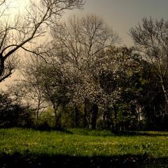Springtime Ahead