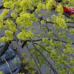 Shredding Branches 1
