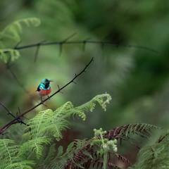 Congo Basin Rainforest - Lush Dawn Chorus In Rural Gabon