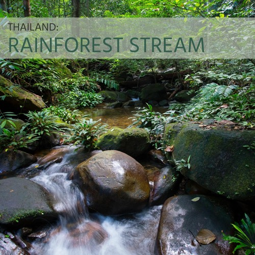Sounds of Wild Thailand IV: Rainforest Stream