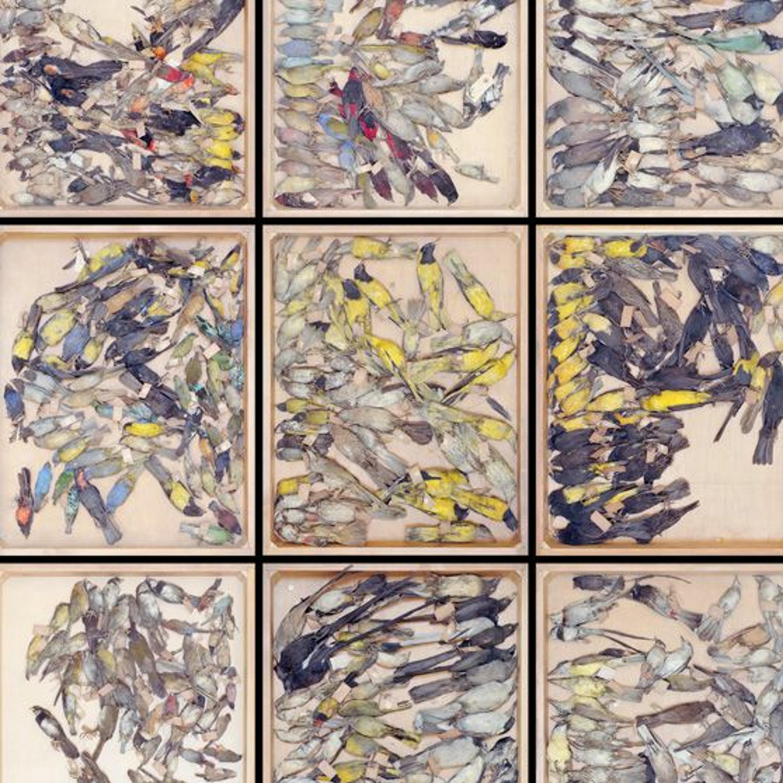 """Exposition """"Time lapses us"""" - Vincent Chevillon - Regard croisé """"science et art"""""""
