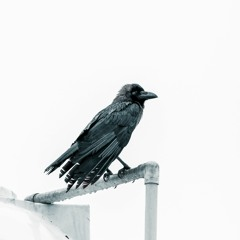 THE CROW'S BACK.