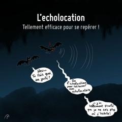 414 - L'echolocation... tion... tion