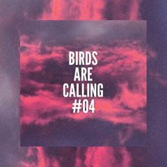 Maz @ Birds Are Calling #04