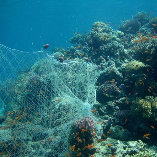 Un filet de pêche fantôme de 6000m2 retiré de l'eau à l'Ile Sainte-Marguerite