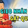 GIEO NHÂN Nào GẶT QUẢ Ấy TRIỆU Người VIỆT Đã NGHE Và Thay Đổi SỐ MỆNH Nhờ Video Này Phật Pháp Từ Bi