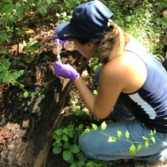 How Rita de Cassia Pessotti used iNaturalist to find beetle galleries in the wild