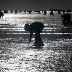 Autonomiser les cueilleuses de palourdes en Tunisie
