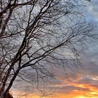A Cold Dawn