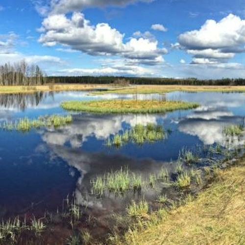 Pavalium - Viralanjärvi