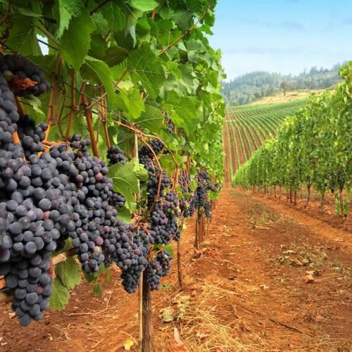 One Thing Needful: Union With the True Vine (John 15:1-8)