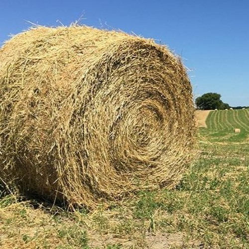 Beef Buzz- Katelyn McCullock of LMIC Talks Hay Price and Supply Outlook