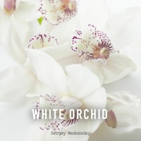 Sergey Wednesday - White Orchid