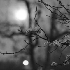 white nights (егор натс flip)