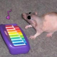 Chillsong Random rat(mixed)