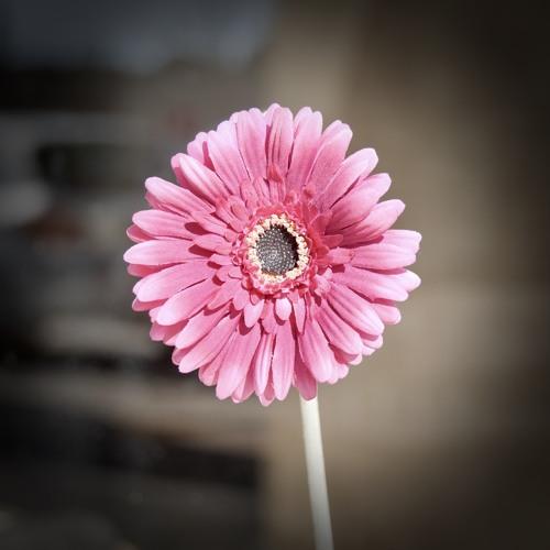Fleur qui flâne
