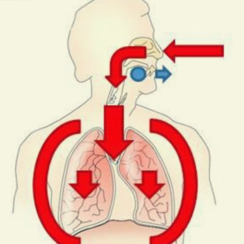 Entrevista respiración circular
