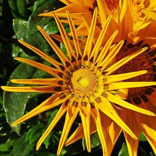 Märchen des Monats März: La Korona - Frau Sonne (Teil 1)