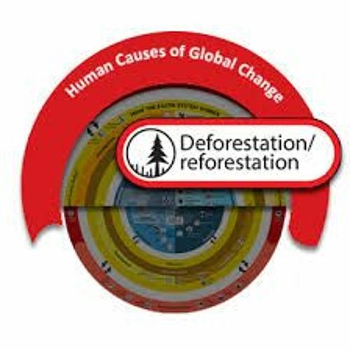 08 May 2021 Becoming Environmentally Friendly (focusing More On Deforestation And Reforestation)