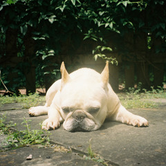 Mommydog (feat. CJ Smith)