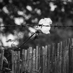 Za plotem...