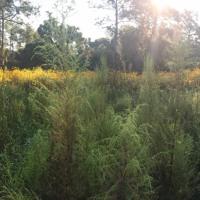 Bioacoustics, Sunrise Songbird Calls
