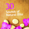 Songs of English Birds