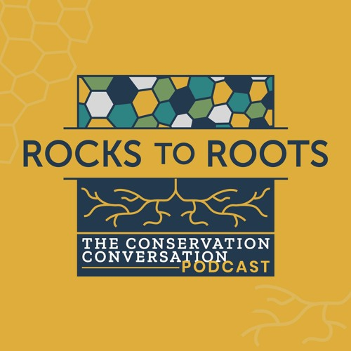 Introducing Rocks To Roots
