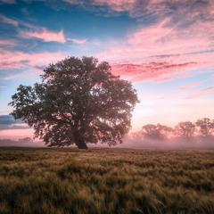 Yom Kippur: Forgiveness, Atonement, and Mercy