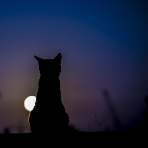 The Century Cat