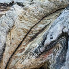 Ficus x lxsh - Erosion